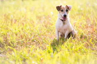 #orangemarcus #myminions #artisticpetportraits #pets #dogs #jacjac