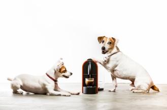 #orangemarcus #myminions #artisticpetportraits #pets #dogs #jacjacviolet
