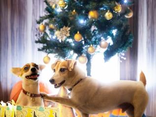 友達全員に メリークリスマス!