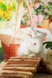 animal, #animal, animals, #animals, アニマル, #アニマル, 動物, #動物, どうぶつ, #どうぶつ, 獣, #獣, けもの, #けもの, けだもの, #けだもの, 生き物, #生き物, いきもの, #いきもの, rabbit, #rabbit, rabbits, #rabbits, wabbit, #wabbit, wabbits, #wabbits, coney, #coney, bunny, #bunny, bunnies, #bunnies, 兎, #兎, 兔, #兔, ウサギ, #ウサギ, うさぎ, #うさぎ, orangemarcus, #orangemarcus, iam_orangemarcus, #iam_orangemarcus, オレンジマーカス, #オレンジマーカス, 李Marcus, #李Marcus, #シンガポール, シンガポール, #写真家, 写真家, #カメラマン, カメラマン, OrangeMarcus©, www.OrangeMarcus.com, @iam_orangemarcus, #シンガポールの写真家, シンガポールの写真家, tattooed photographer, #tattooedphotographer, photographer with tattoos, #photographerwithtattoos, 入れ墨された写真家, #入れ墨された写真家, 刺青された写真家, #刺青された写真家, タトゥーの写真家, #タトゥーの写真家, 入れ墨の写真家, #入れ墨の写真家, 刺青の写真家, #刺青の写真家, 俺んジ, #俺んジ, OrangeMarcus Photography, #orangemarcusphotography, orangemarcus, #orangemarcus, iam_orangemarcus, #iam_orangemarcus, オレンジマーカス, #オレンジマーカス, photographer, #photographer, professional photographer, #professionalphotographer, orangemarcus photographer, #orangemarcusphotographer, orangemarcus photography, #orangemarcusphotography, 写真家、#写真家, しゃしんか, #しゃしんか, 写真師, #写真師, しゃしんし, #しゃしんし, 撮影者, #撮影者, さつえいしゃ, #さつえいしゃ, カメラマン, #カメラマン, シャターバグ, #シャターバグ , #シンガポール, シンガポール, #シンガポールの写真家, シンガポールの写真家, プロ, #プロ, プロ写真家, #プロ写真家, community, #community, community service, #communityservice, community work, #communitywork, 地域奉仕, #地域奉仕, ちいきほうし, #ちいきほうし, volunteer, #volunteer, ボランティア, #ボランティア, 有志, #有志, ゆうし, #ゆうし, charity, #charity, charity work, #charitywork, 慈善活動, #慈善活動, じぜんかつどう, #じぜんかつどう, animal rescue, #animalrescue, 動物救助, #動物救助, どうぶつきゅうじょ, #どうぶつきゅうじょ, animal adoption, #animaladoption, 動物養子縁組, #動物養子縁組, help the animals, #helptheanimals, help animals, #helpanimals, 動物を助ける, #動物を助ける, animal shelter, #animalshelter, 動物保護施設, #動物保護施設, animal charity, #animalcharity, 動物の慈善団体, #動物の慈善団体, adoptdontshop, #adoptdontshop, bunny wonderland, #bunnywonderland, bunny wonderland sg, #bunnywonderlandsg, @BunnyWonderlandSg, bunny wonderland singapore, #bunnywonderlandsingapore, sg bunnies, #sgbunnies, bunn