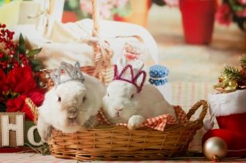 bunnywonderlandxmas_8003