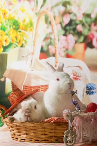 bunnywonderlandxmas_8004