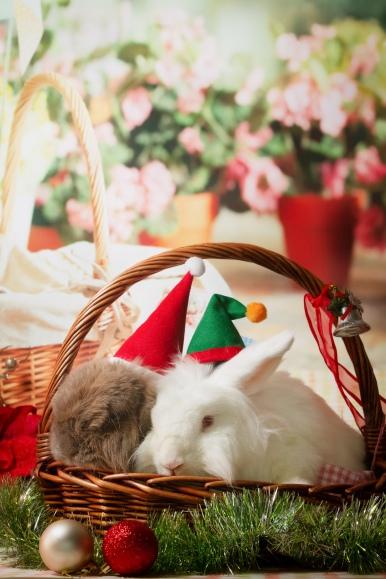 bunnywonderlandxmas_8005