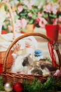 bunnywonderlandxmas_8007