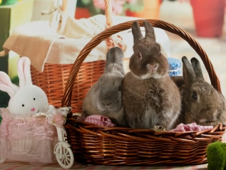 Bunny Wonderland XmasPhotoshoot