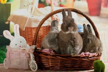bunnywonderlandxmas_8008