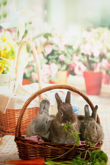 bunnywonderlandxmas_8009