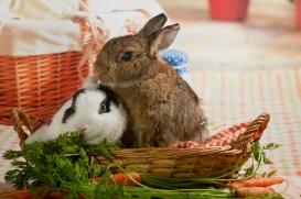 bunnywonderlandxmas_8010
