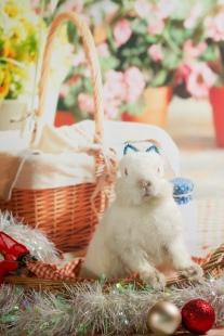 bunnywonderlandxmas_8011