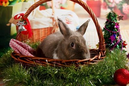 bunnywonderlandxmas_8012