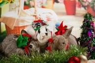bunnywonderlandxmas_8013