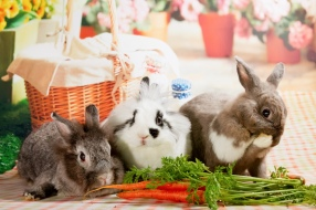 bunnywonderlandxmas_8014