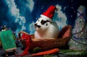 bunnywonderlandxmas_8015