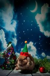 bunnywonderlandxmas_8016