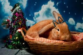 bunnywonderlandxmas_8017