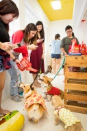 stella&chewys sausage party_8019