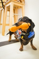 stella&chewys sausage party_8020